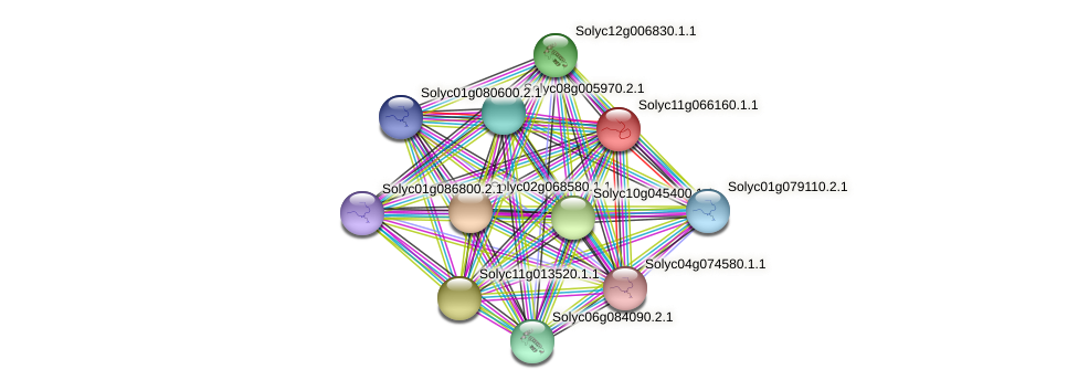 Solyc11g066160.1.1 protein (Solanum lycopersicum) - STRING interaction network