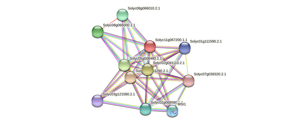 Solyc11g067200.1.1 protein (Solanum lycopersicum) - STRING interaction network