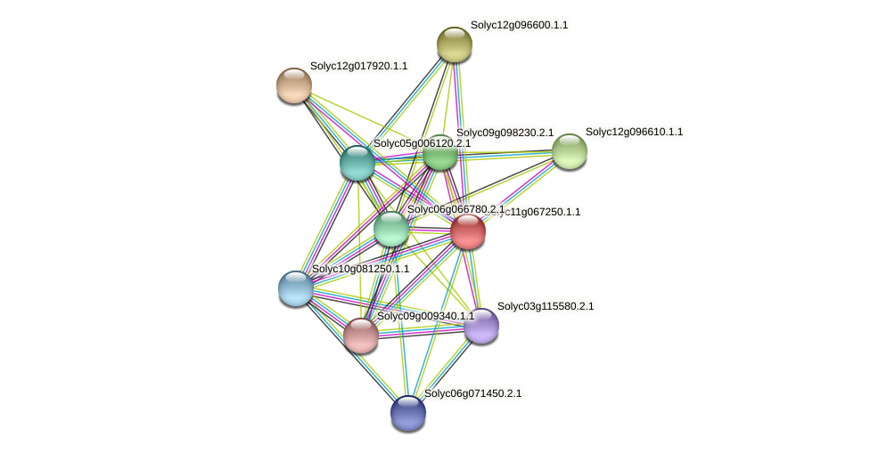 Solyc11g067250.1.1 protein (Solanum lycopersicum) - STRING interaction network