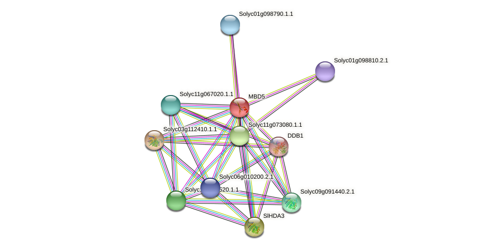 MBD5 protein (Solanum lycopersicum) - STRING interaction network