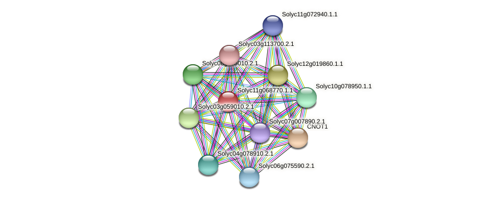 Solyc11g068770.1.1 protein (Solanum lycopersicum) - STRING interaction network