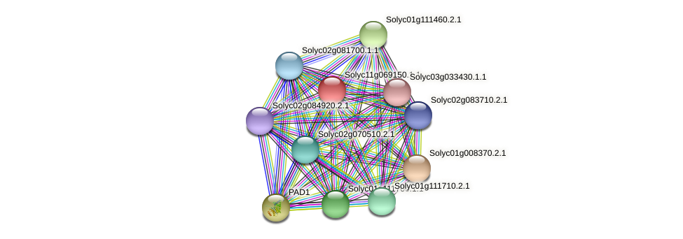 Solyc11g069150.1.1 protein (Solanum lycopersicum) - STRING interaction network