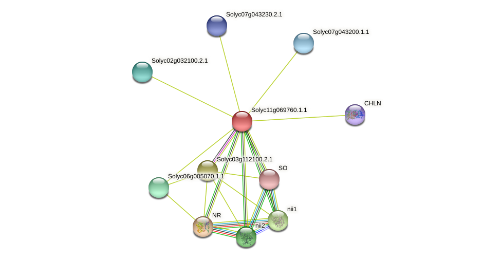 Solyc11g069760.1.1 protein (Solanum lycopersicum) - STRING interaction network