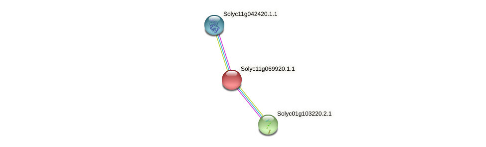 Solyc11g069920.1.1 protein (Solanum lycopersicum) - STRING interaction network