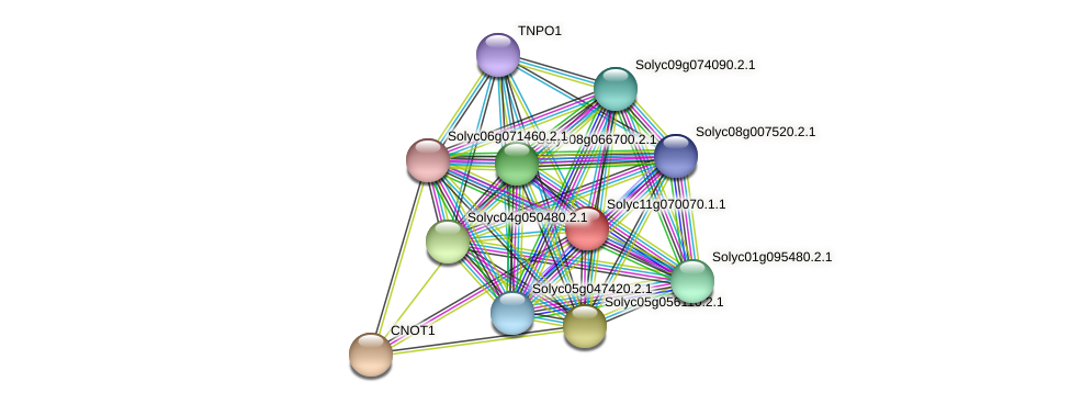 Solyc11g070070.1.1 protein (Solanum lycopersicum) - STRING interaction network