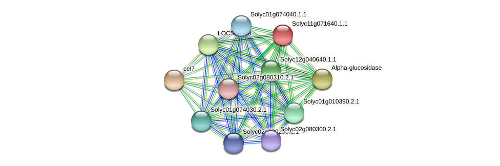 Solyc11g071640.1.1 protein (Solanum lycopersicum) - STRING interaction network