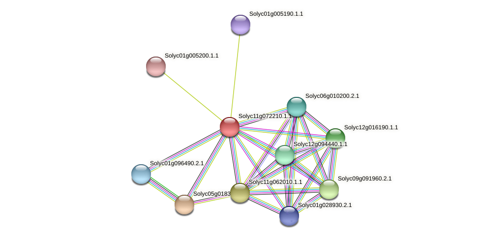 Solyc11g072210.1.1 protein (Solanum lycopersicum) - STRING interaction network