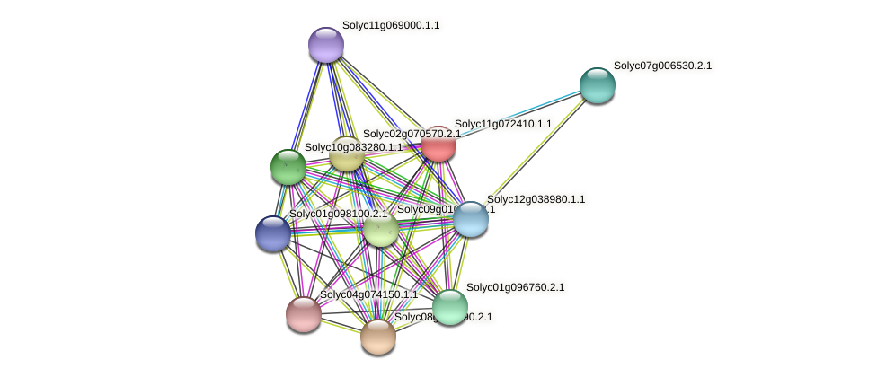 Solyc11g072410.1.1 protein (Solanum lycopersicum) - STRING interaction network