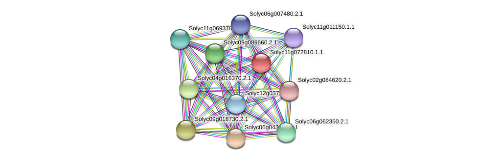 Solyc11g072810.1.1 protein (Solanum lycopersicum) - STRING interaction network