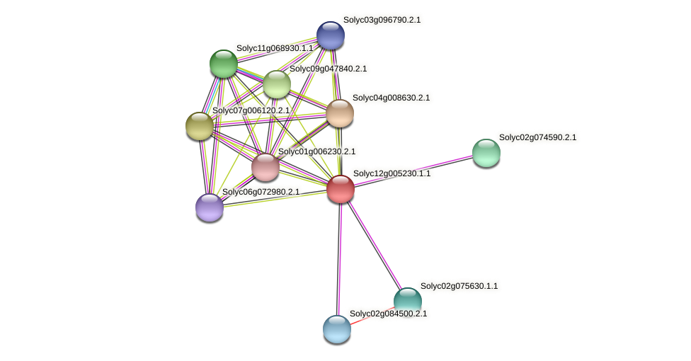 Solyc12g005230.1.1 protein (Solanum lycopersicum) - STRING interaction network