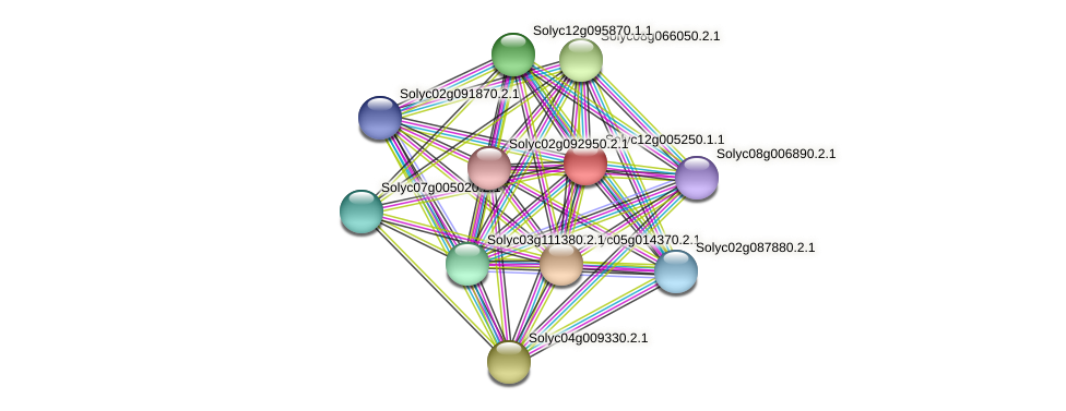 Solyc12g005250.1.1 protein (Solanum lycopersicum) - STRING interaction network