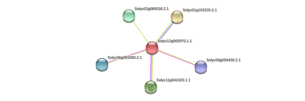 Solyc12g005970.1.1 protein (Solanum lycopersicum) - STRING interaction network