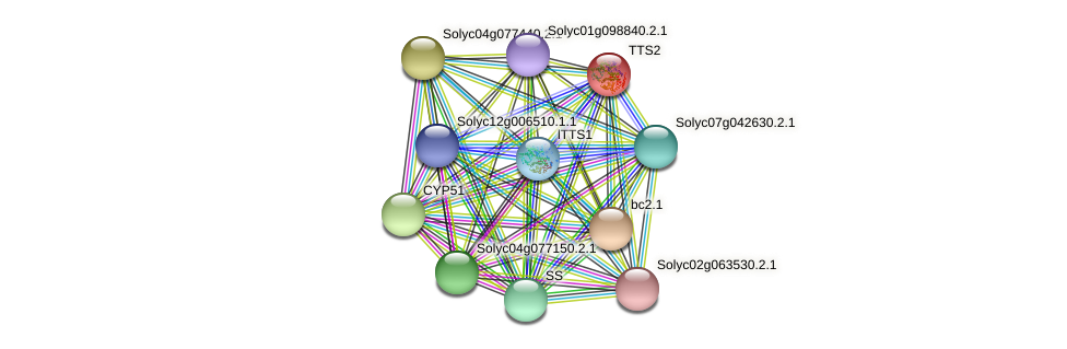 TTS2 protein (Solanum lycopersicum) - STRING interaction network