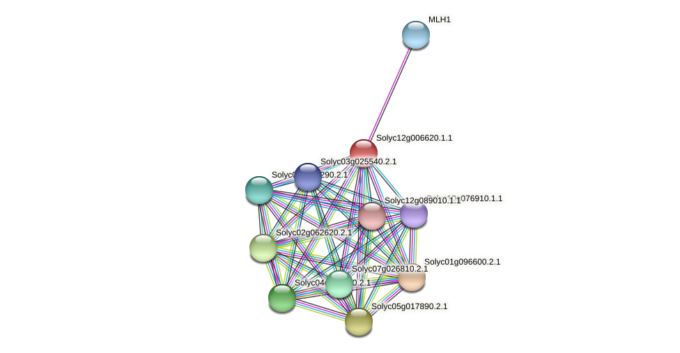 Solyc12g006620.1.1 protein (Solanum lycopersicum) - STRING interaction network