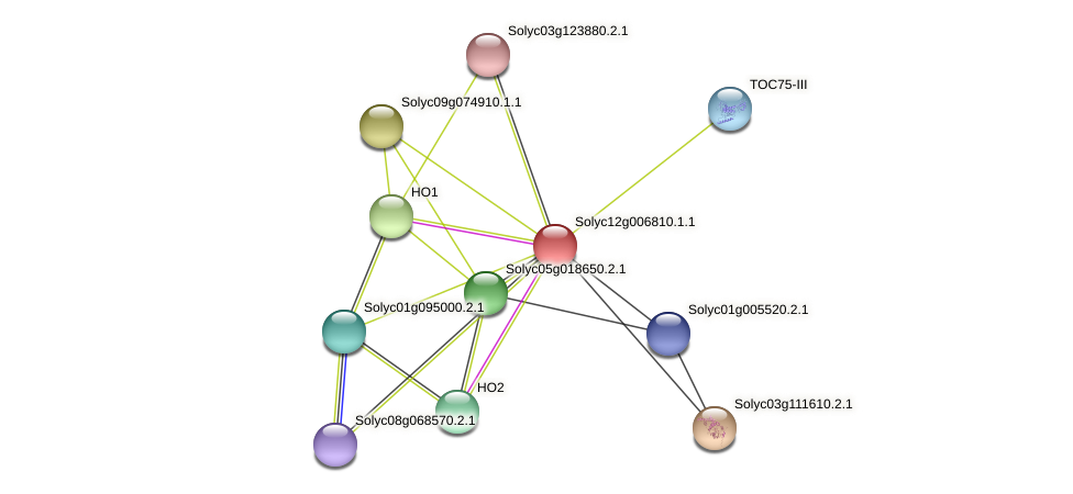 Solyc12g006810.1.1 protein (Solanum lycopersicum) - STRING interaction network