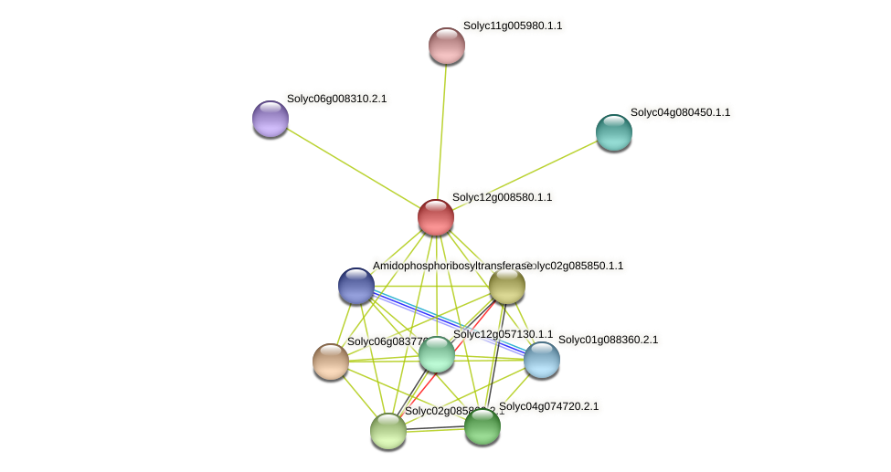 Solyc12g008580.1.1 protein (Solanum lycopersicum) - STRING interaction network