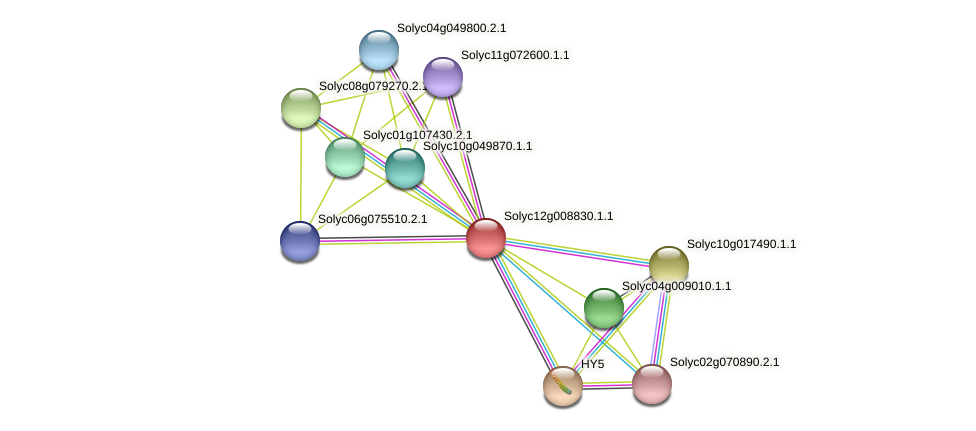 Solyc12g008830.1.1 protein (Solanum lycopersicum) - STRING interaction network