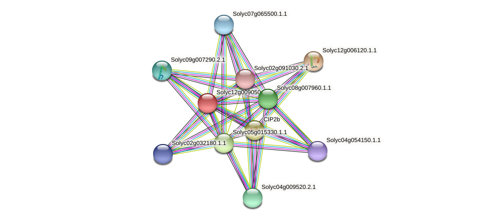 Solyc12g009050.1.1 protein (Solanum lycopersicum) - STRING interaction network