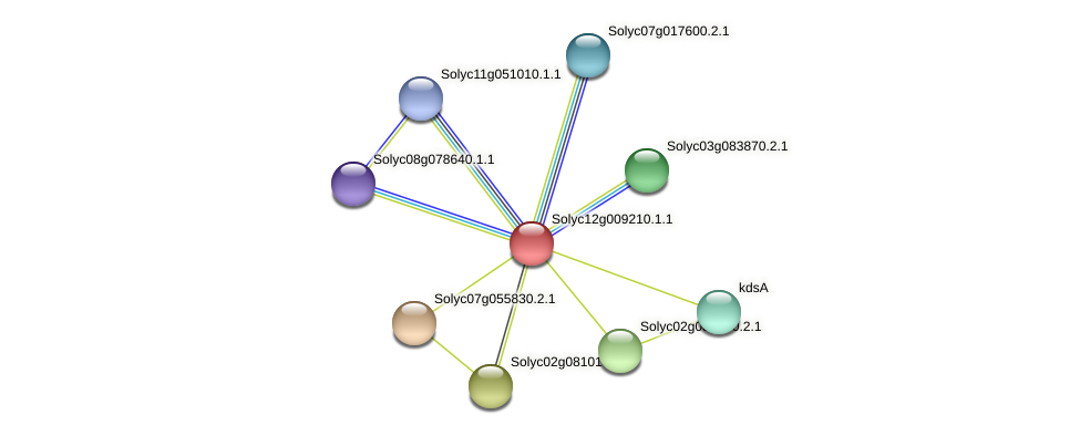 Solyc12g009210.1.1 protein (Solanum lycopersicum) - STRING interaction network