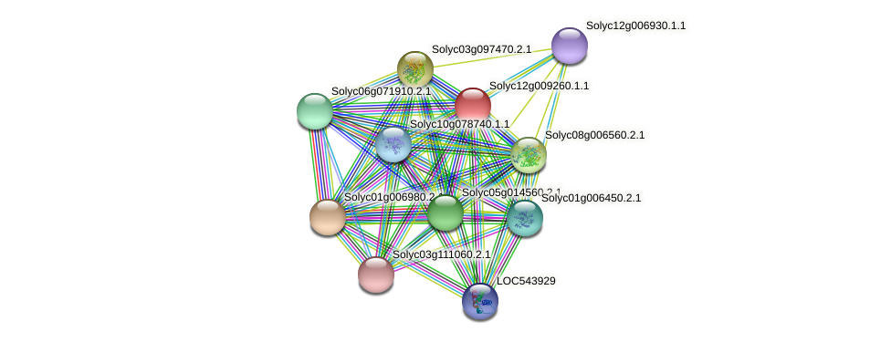 Solyc12g009260.1.1 protein (Solanum lycopersicum) - STRING interaction network