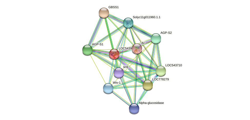 LOC543961 protein (Solanum lycopersicum) - STRING interaction network