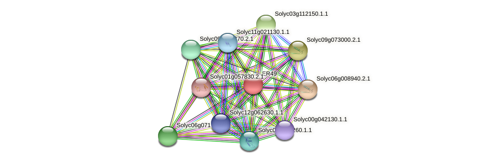 ER49 protein (Solanum lycopersicum) - STRING interaction network