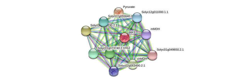 ppc1 protein (Solanum lycopersicum) - STRING interaction network