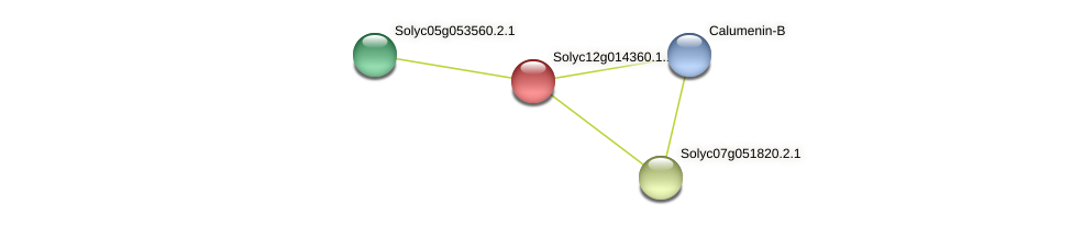 Solyc12g014360.1.1 protein (Solanum lycopersicum) - STRING interaction network