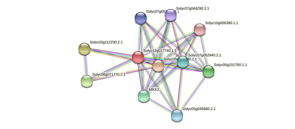 101254363 protein (Solanum lycopersicum) - STRING interaction network