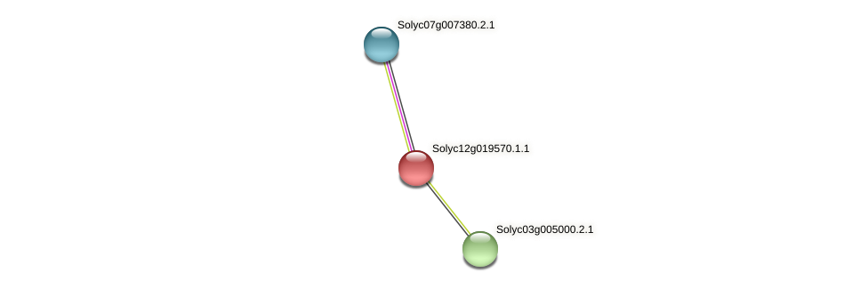 Solyc12g019570.1.1 protein (Solanum lycopersicum) - STRING interaction network