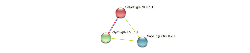 Solyc12g027800.1.1 protein (Solanum lycopersicum) - STRING interaction network