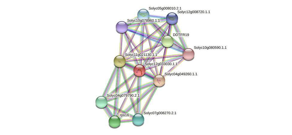 rpl23-A protein (Solanum lycopersicum) - STRING interaction network