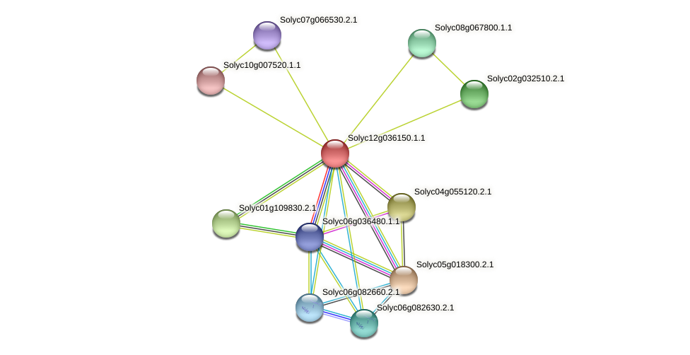 Solyc12g036150.1.1 protein (Solanum lycopersicum) - STRING interaction network