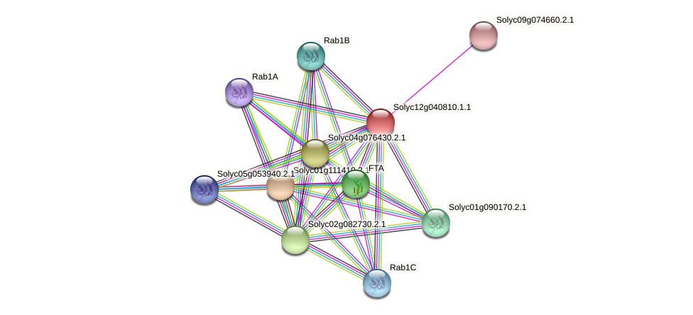 Solyc12g040810.1.1 protein (Solanum lycopersicum) - STRING interaction network