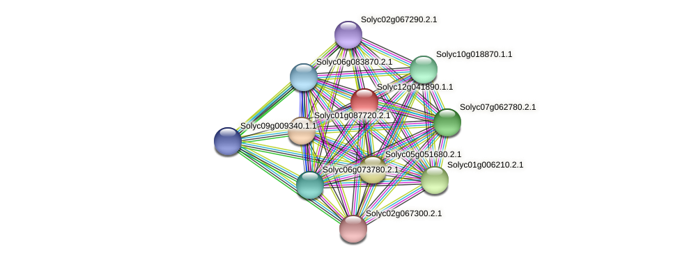 Solyc12g041890.1.1 protein (Solanum lycopersicum) - STRING interaction network