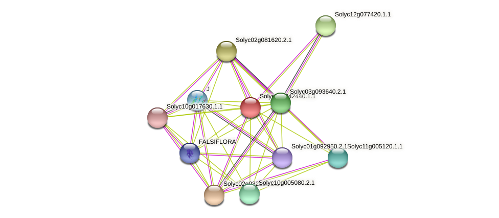 Solyc12g042440.1.1 protein (Solanum lycopersicum) - STRING interaction network