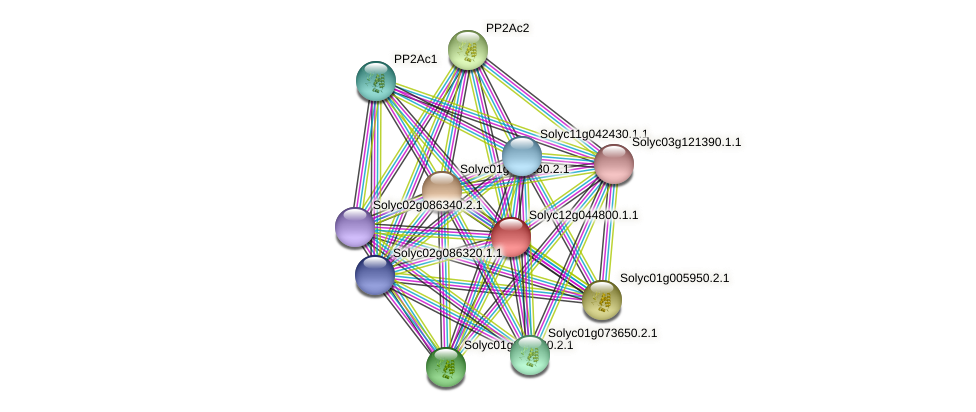 Solyc12g044800.1.1 protein (Solanum lycopersicum) - STRING interaction network