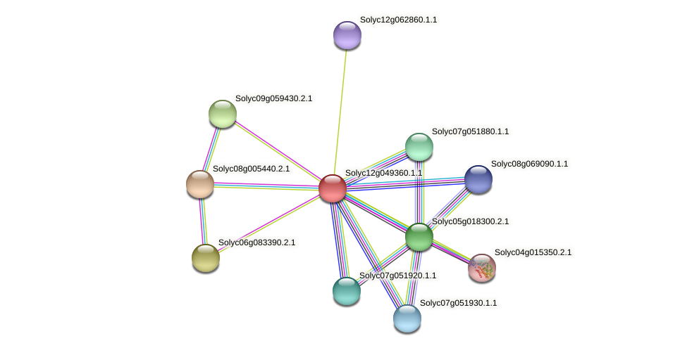 Solyc12g049360.1.1 protein (Solanum lycopersicum) - STRING interaction network