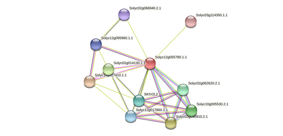 Solyc12g055780.1.1 protein (Solanum lycopersicum) - STRING interaction network