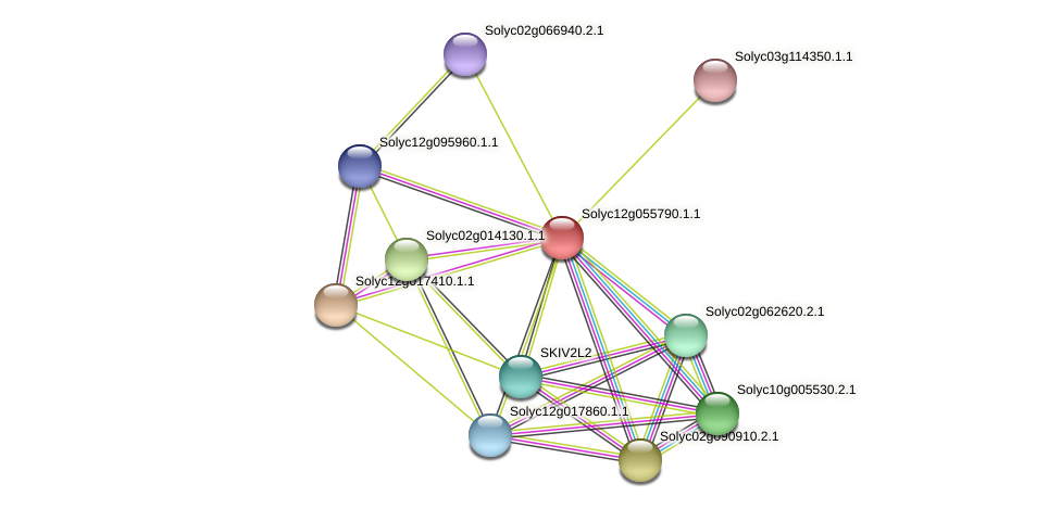 Solyc12g055790.1.1 protein (Solanum lycopersicum) - STRING interaction network