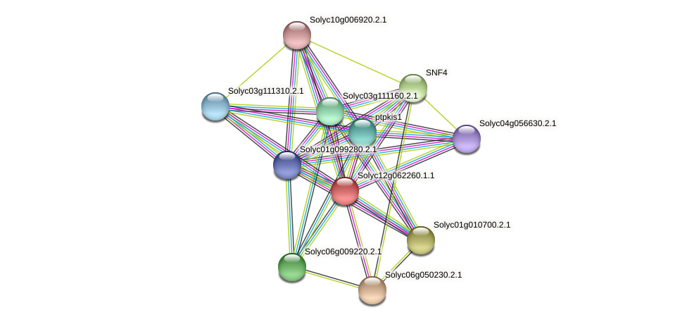 Solyc12g062260.1.1 protein (Solanum lycopersicum) - STRING interaction network