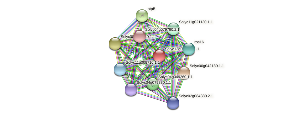 Solyc12g062630.1.1 protein (Solanum lycopersicum) - STRING interaction network