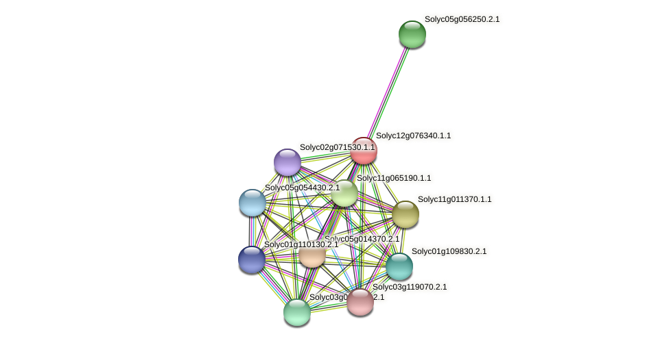 Solyc12g076340.1.1 protein (Solanum lycopersicum) - STRING interaction network