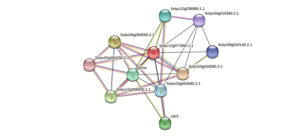 Solyc12g077660.1.1 protein (Solanum lycopersicum) - STRING interaction network