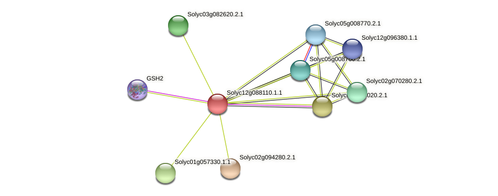 Solyc12g088110.1.1 protein (Solanum lycopersicum) - STRING interaction network