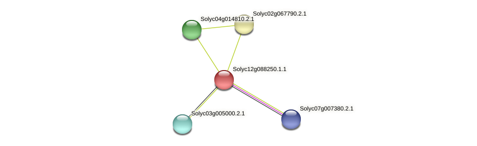 Solyc12g088250.1.1 protein (Solanum lycopersicum) - STRING interaction network