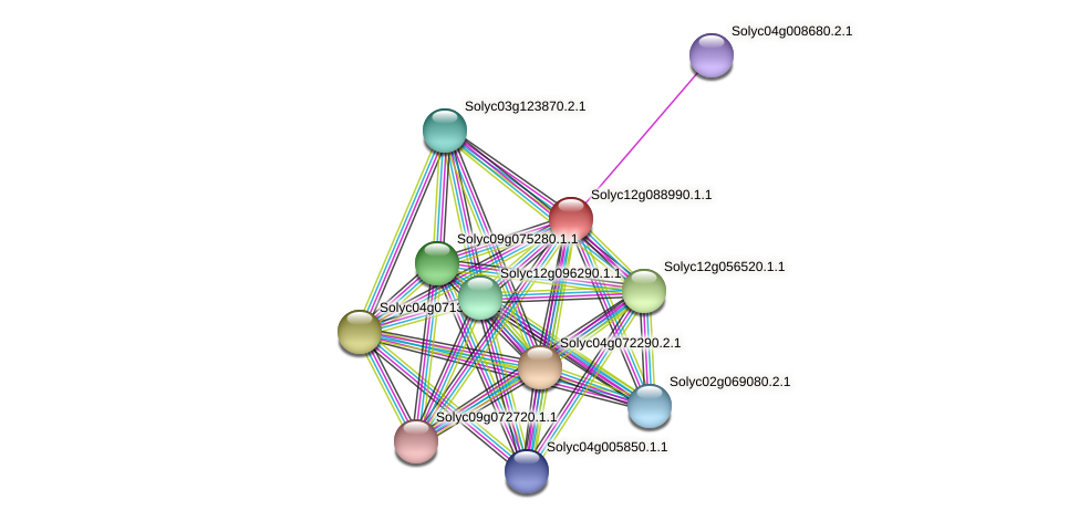 Solyc12g088990.1.1 protein (Solanum lycopersicum) - STRING interaction network