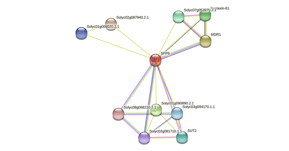 SFP6 protein (Solanum lycopersicum) - STRING interaction network