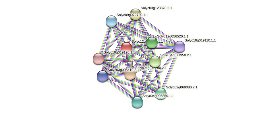Solyc12g096290.1.1 protein (Solanum lycopersicum) - STRING interaction network