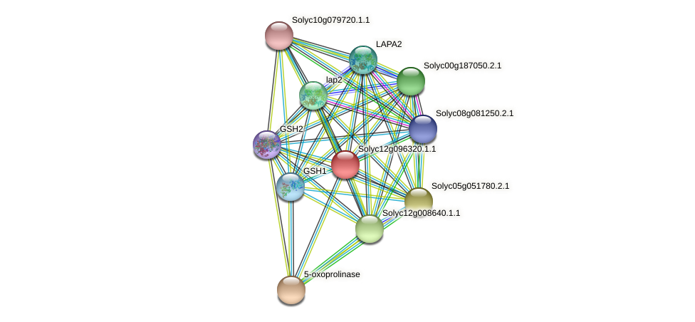 Solyc12g096320.1.1 protein (Solanum lycopersicum) - STRING interaction network